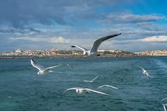 2013-Turquia-Istambul-0126.jpg