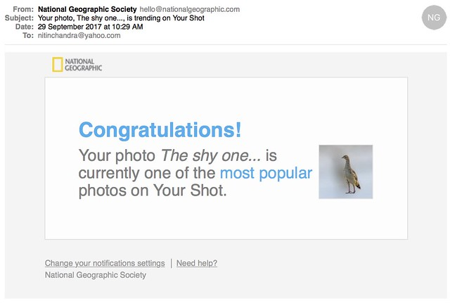 Your photo The shy one is trending on Your Shot