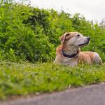 2015-06-01_17-28-13 Hund