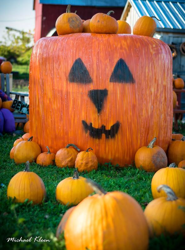Autumn Harvest 8