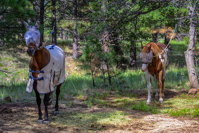 Camping: Little Elden Springs Horse Camp