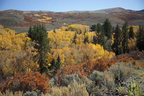 cottonwoods engelmannspruce gambeloak sagebrush cimarronstatewildlifearea colorado earthnaturelife wondersofnature