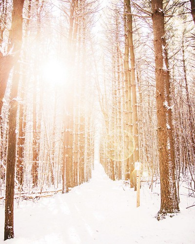 Nature Trail. Lansing, Michigan. Photographer Dan Price