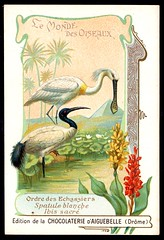French Tradecard - Ibis and Spoonbill