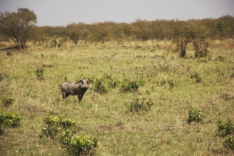 Maasai Mara 2 44