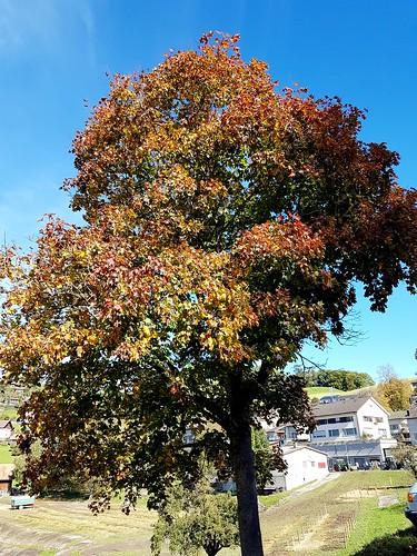 Autumn - 55 years later