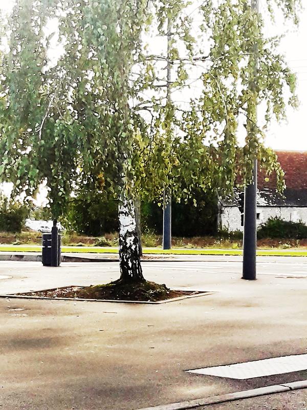 Troncs d'arbres 16/365