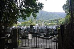 Arashiyama Bamboo Grove - 嵐山竹林小徑
