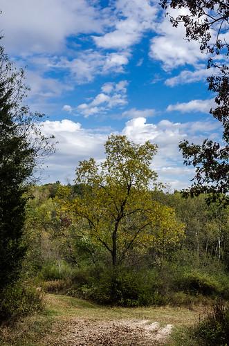 nikon7000 trees hike orangeloop nordictrail wisconsin trail kettlemorainestateforest woods southernunitkettlemorainestateforest nature