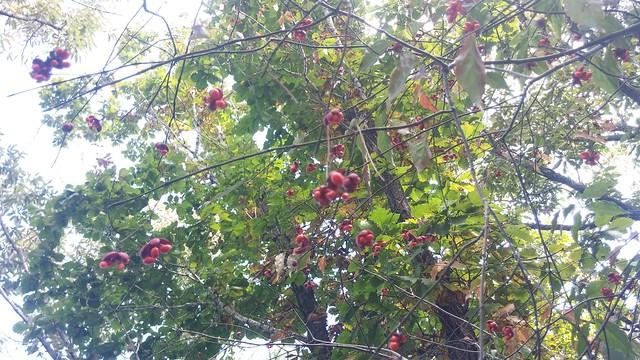 도장산 부녀산행 : 참회나무