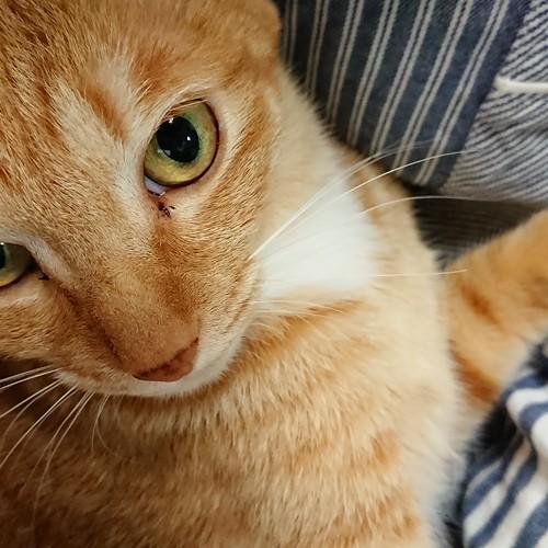 さっきまで借りてきた猫のように余所余所しかったのに by Chinobu