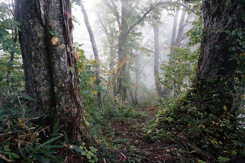 """Mountain-climbing path """"KAGA ZENJOUDOU"""""""