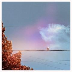•Bird on a wire  ☁️ 🌲