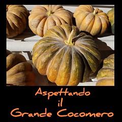 #zucche #:jack_o_lantern: #autunno #GrandeCocomero #Halloween  #questelehopiantateio #orto #pumpkins