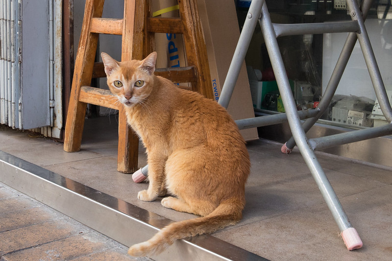 Cat in Mong Kok