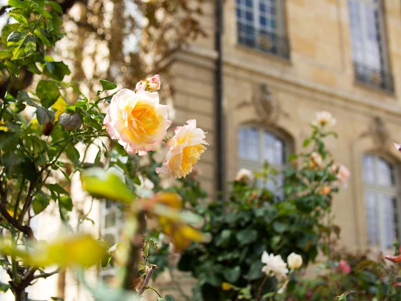Ruusuja Rodin-museossa