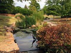 Blue Heron at Tulsa's Centennial Park