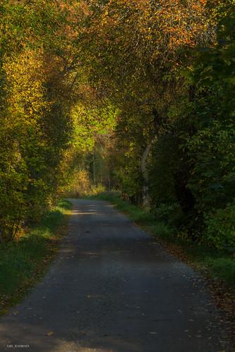 colorful finland forest road tree trees travel tie yellow red suomi syksy autumn valo värikäs luonto landscape kuusankoski kouvola
