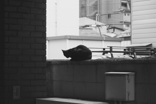 Today's Cat@2017-10-06