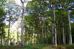 Forêt - Photo of Bannost-Villegagnon