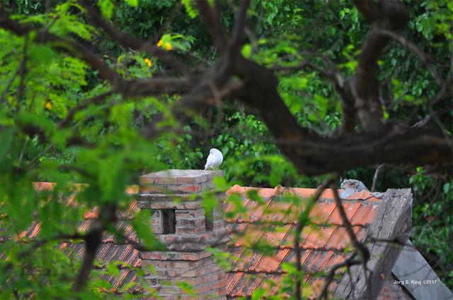 Blanca sobre la chimenea