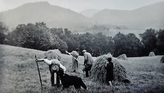 Harvesting at a croft on Morrone at Braemar in the 1930s