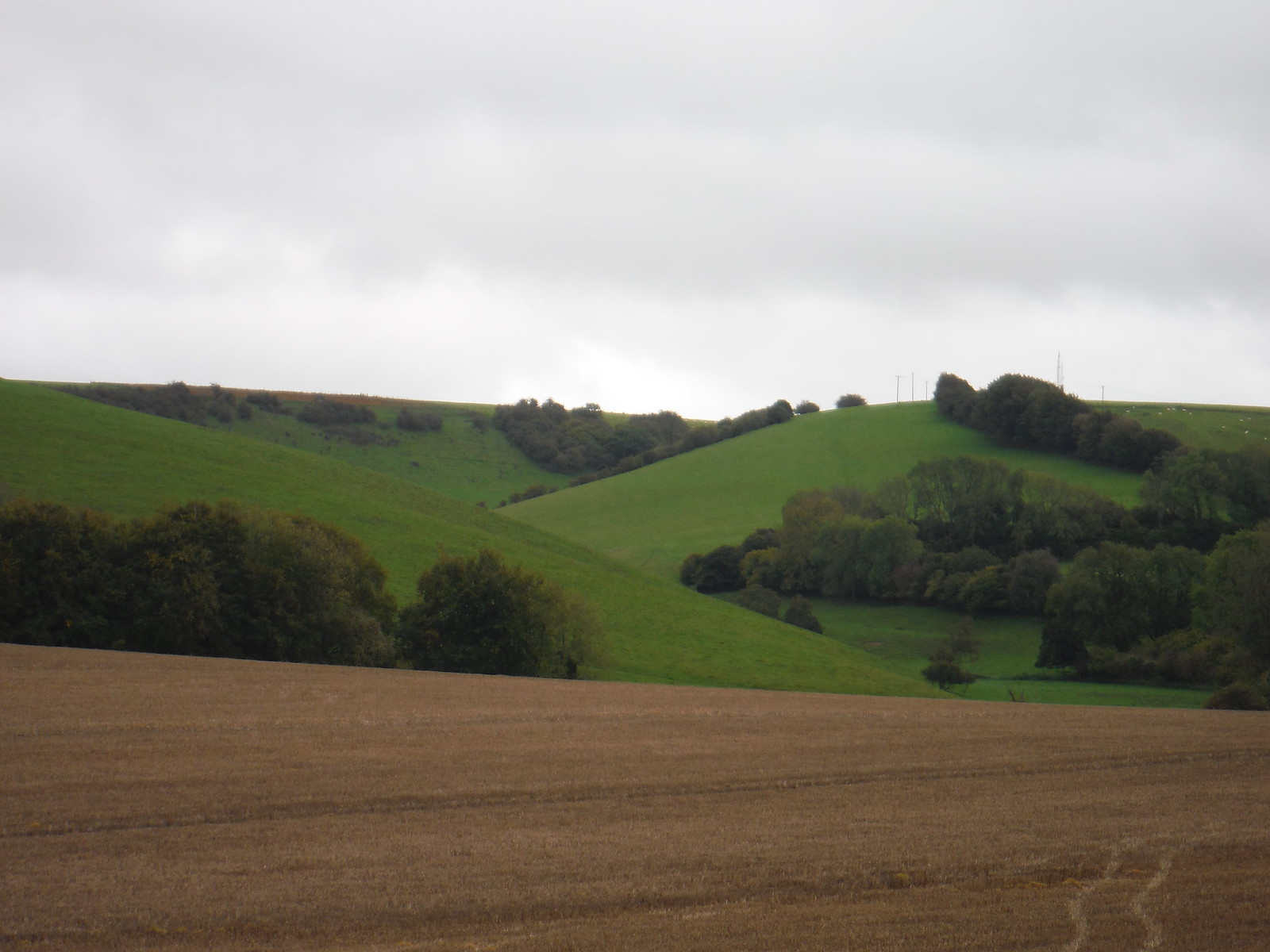 View up Small Down SWC Walk 183 - South Downs Way Section 2: West Meon to Petersfield (East Meon Lunch Pubs Diversion)