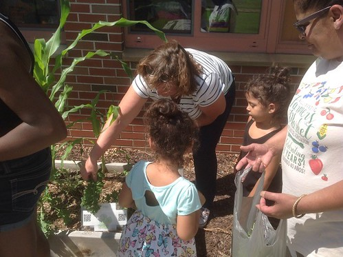 Amy Walker and students harvest kale from the garden.