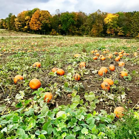 pumpkinfarm12-1017