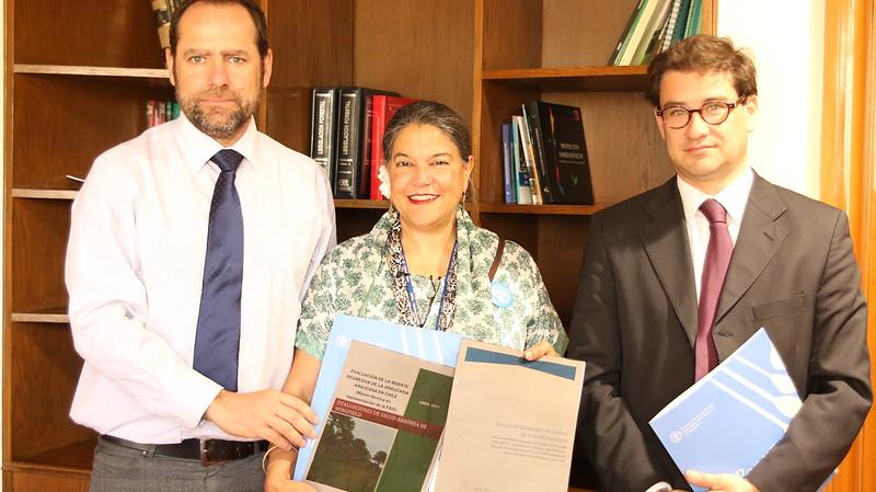 FAO entrega estudios sobre araucaria y gestión de incendios en Chile