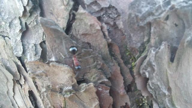 도장산 부녀산행 : 개미