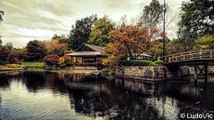 Jardin japonais d'Hasselt (BE)
