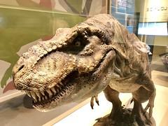 T-Rex Model at Perot Museum