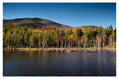 Autumn leaves, Whiteface Mountain