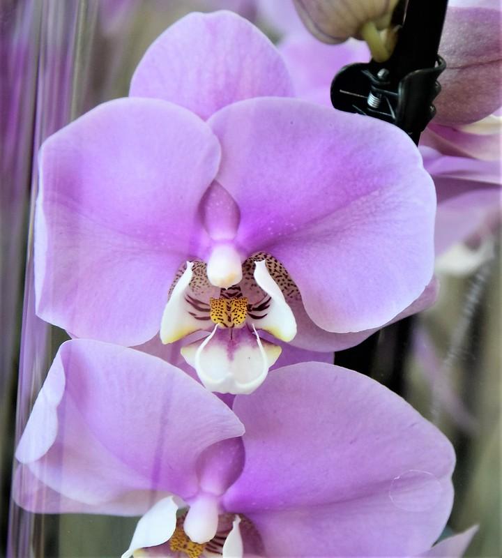 Orchids 11.10 (2)