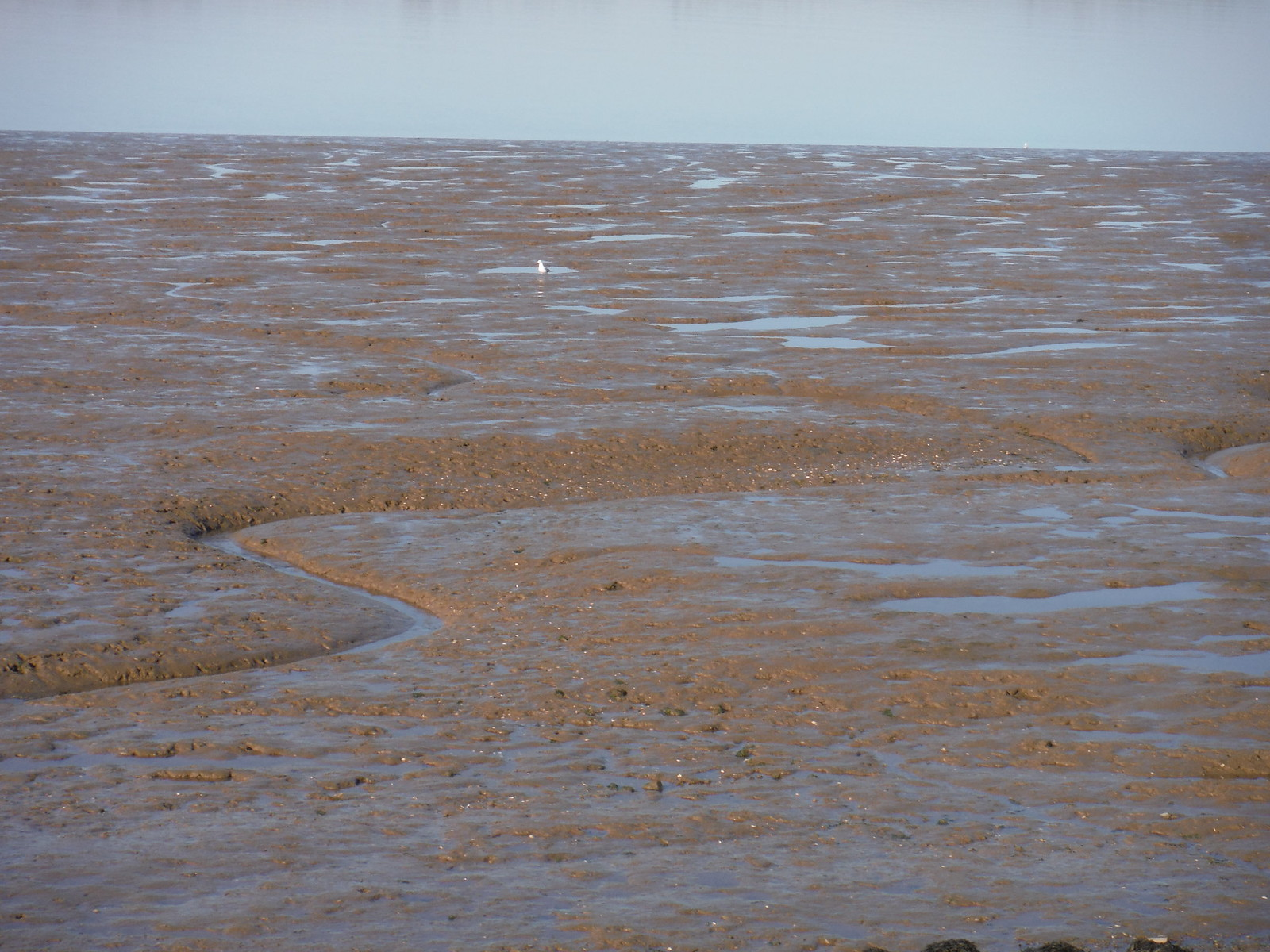 Mud, Oare Marshes Nature Reserve SWC Walk 299 - Teynham to Faversham