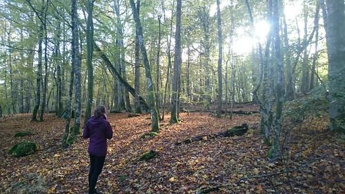 Lisa in een bos