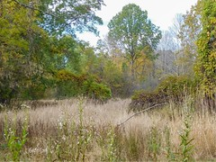 Chagrin River Park