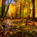 Wonalancet River by Robert Clifford