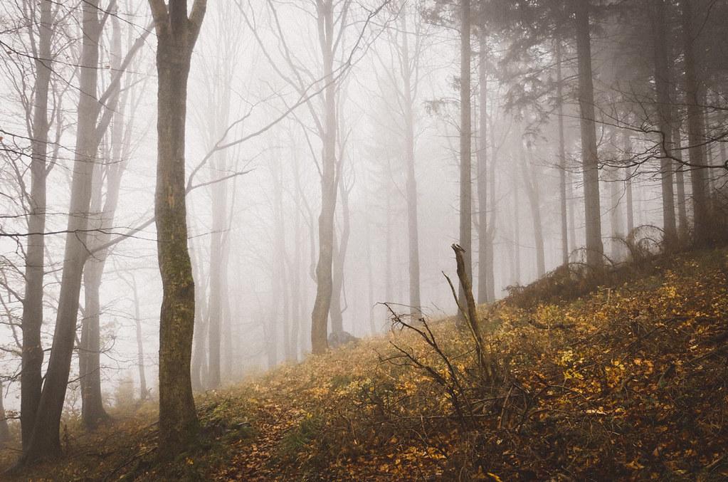 Der Goldberg im Nebel