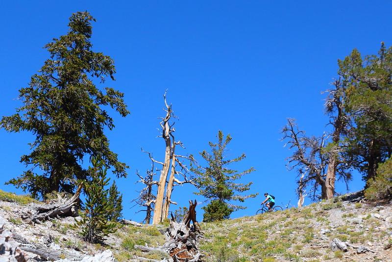 IMG_9763 Mountain Biking on Bristlecone Pine Trail