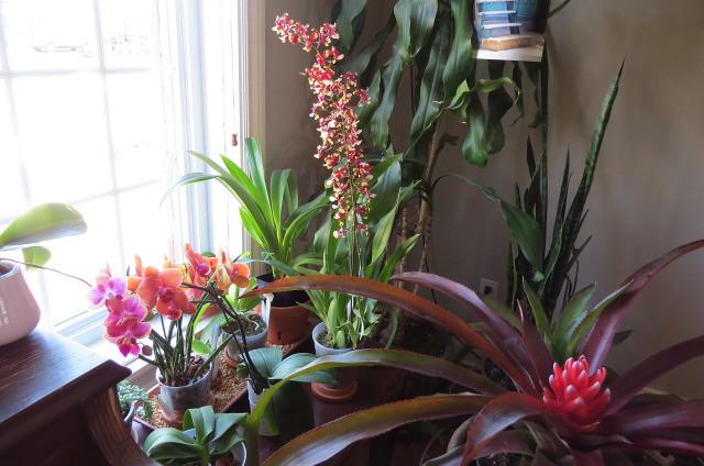 Orchidées chez lavandula - Page 5 23933232138_650fa1f96c_z