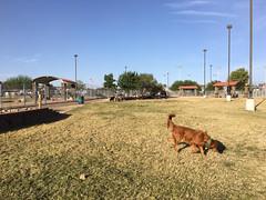 Dog Park 10.2017