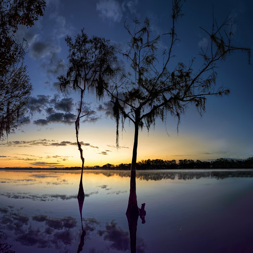 cypress usa ©edrosack sunrise calm lakemillspark nature water tree sky centralflorida lake landscape dawn florida
