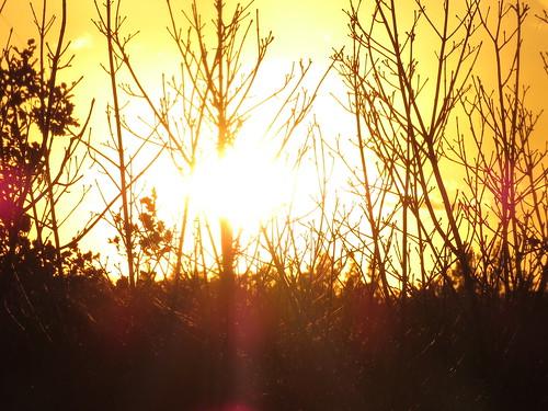 00772438 Sunset