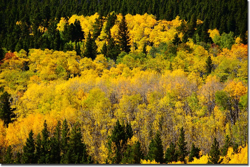 Peak to Peak Scenic Byway in Fall, Colorado (6)