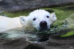 Zoo Visit (Tierpark Hellabrunn) September 2017