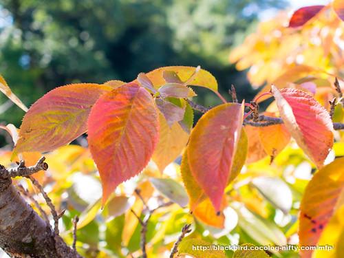 Autumn 20171008 #02