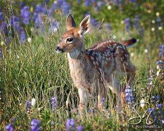 Meadow Fawn 9438-17