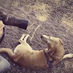 2014-09-05 um 15-06-08 - Hund & Herrchen